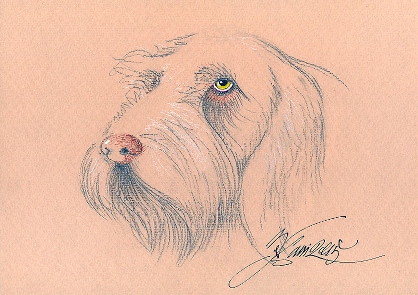spinone 72